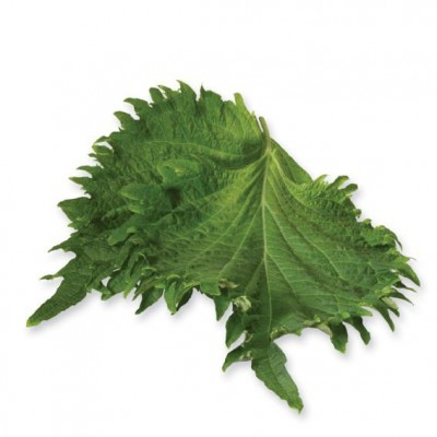 Shiso Leaves Green, Pays-Bas, la barquette