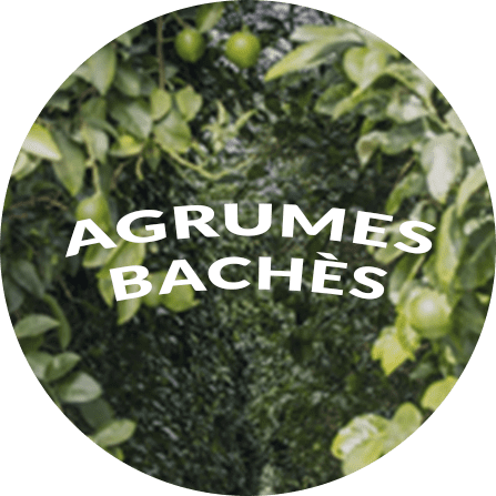 Agrumes Bachès