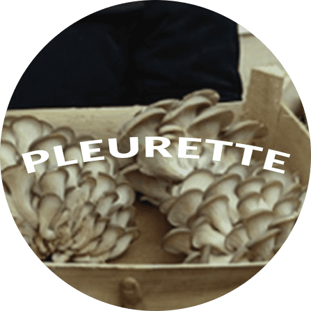 Pleurette